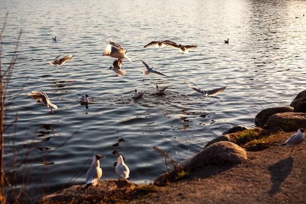 Bella vista di uccelli che nuotano e volano sulla riva del fiume