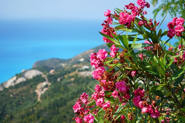 Beautiful view of the blue sea shore through rose bushes on a sunny day