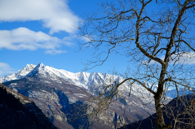 Beautiful view of a dried tree with the snow-covered mountains and the blue sky