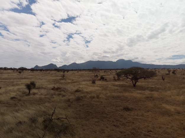 Beautiful view of a field under the magnificent clouds in tsavo west, taita hills, kenya