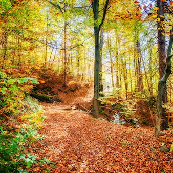 Beautiful view of the forest on a sunny day. autumn landscape. carpathians. ukraine