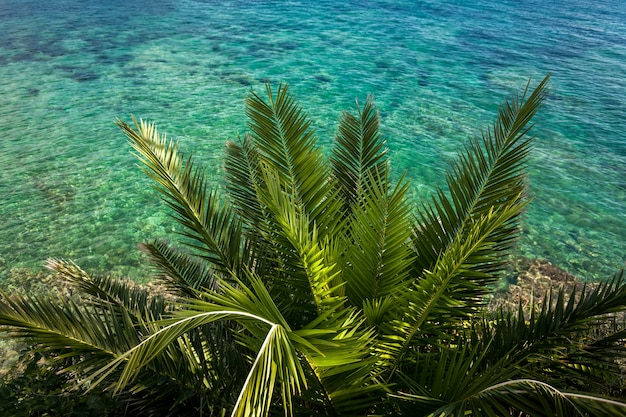 Beautiful view from above on green palm growing at sea with turquoise water