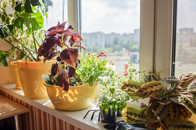 Beautiful view from the window with blooming flowers in balcony garden nature and ecology at home