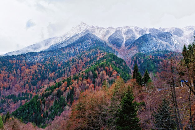 Beautiful view of the hills covered with colorful autumn trees, snow-capped peak, fall season in mountains. use for background, backdrop or design element in natural concept.