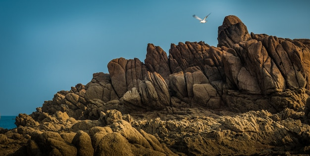 Beautiful view of the magnificent rocky cliffs by the sea and a sea bird flying