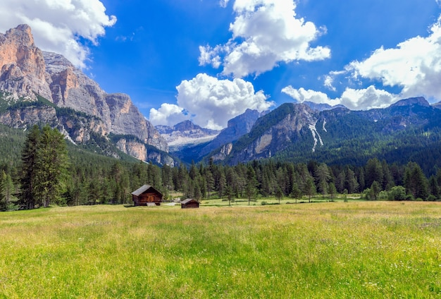イタリアのドロミテのふもとに咲く高山草原の美しい景色。