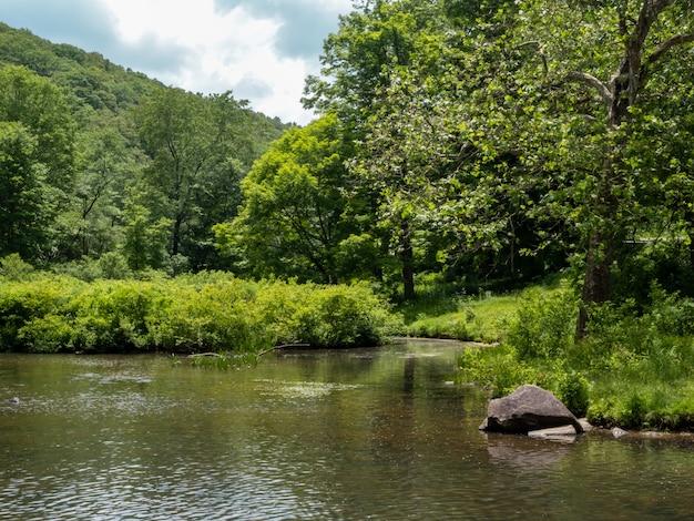 나무로 둘러싸인 호수의 아름다운 전망 프리미엄 사진