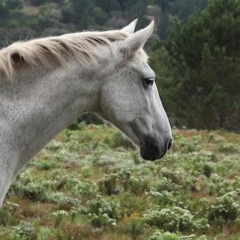 緑の野原と壮大な白い馬の美しい景色