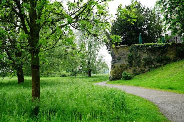 公園の草や木々を通る小道の美しい景色