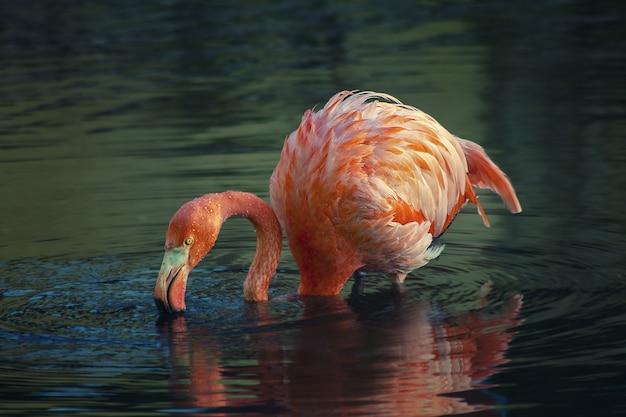 호수에서 핑크 플라밍고의 아름다운 전망
