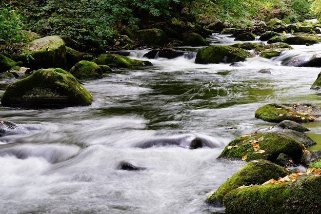 森の中を流れる川の美しい景色