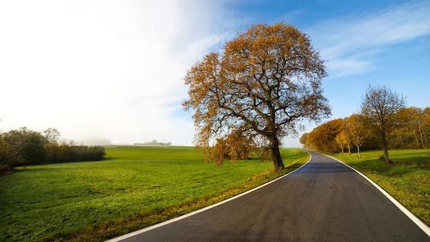 나무로 둘러싸인 도로의 아름다운 전망