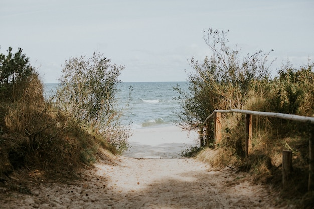 Прекрасный вид на аллею к пляжу сквозь зелень