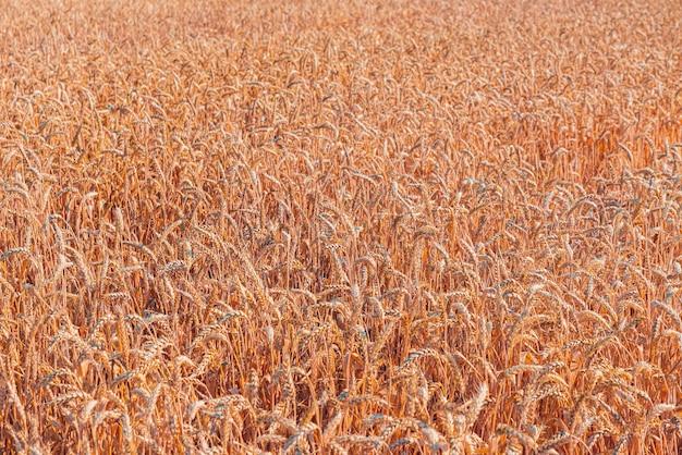 밀밭의 아름다운 전망