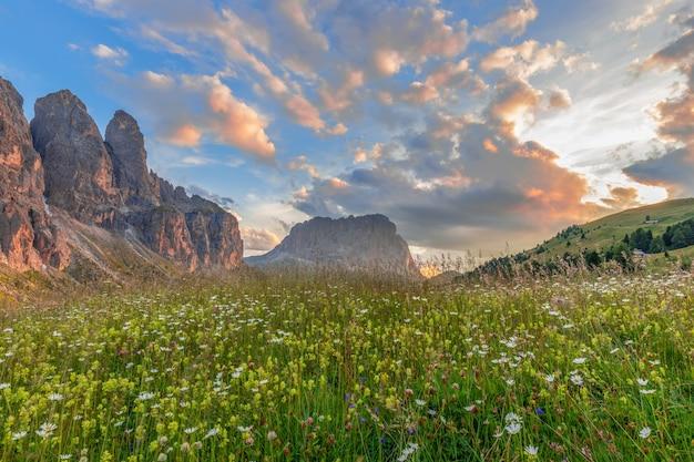 Прекрасный вид на альпийский цветущий луг и доломиты в лучах заходящего солнца.