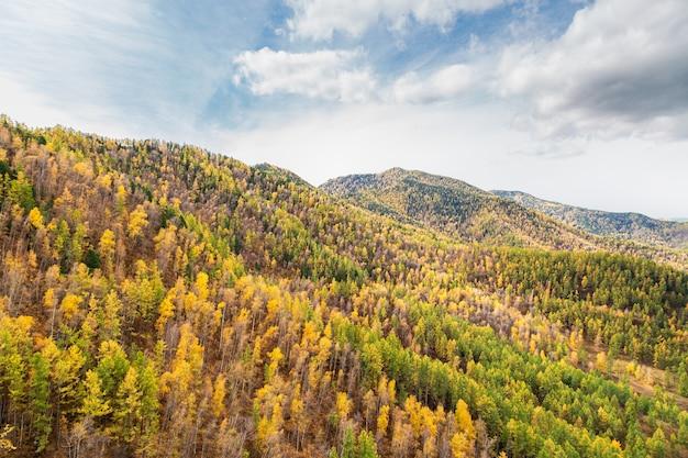 알타이 공화국, 러시아의 산 경사면에 자작 나무, 가문비 나무, 삼나무의 다채로운 혼합 숲의 아름 다운보기