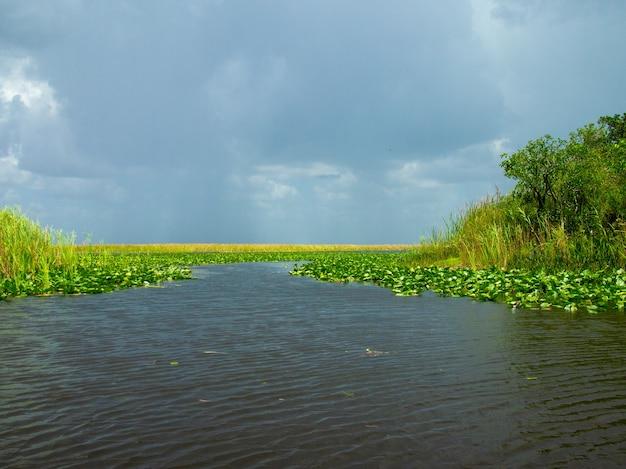 夏のエバーグレーズ湿地の美しい景色