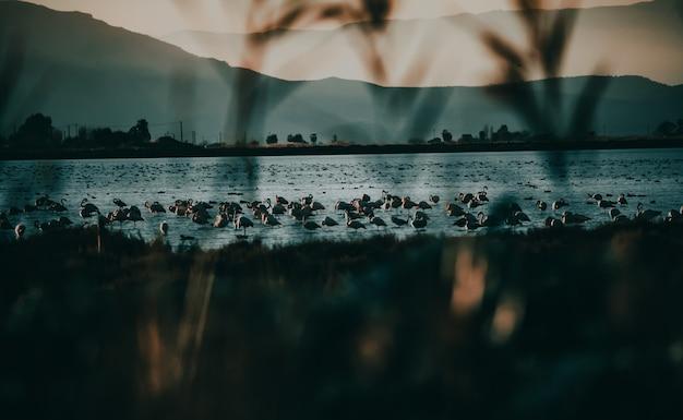 산맥이있는 호수에서 플라밍고의 아름다운 전망