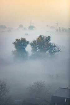 Прекрасный вид на лес, покрытый туманом, рано утром до восхода солнца