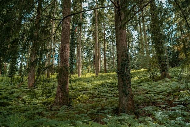 昼間の森の緑の木々の美しい景色