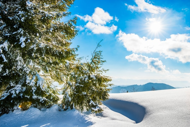 冬の丘の上に生えている雄大な緑のトウヒの木の美しい景色は、晴れた凍るような冬の日に青い空と白い雲に向かって雪の吹きだまりを漂わせます