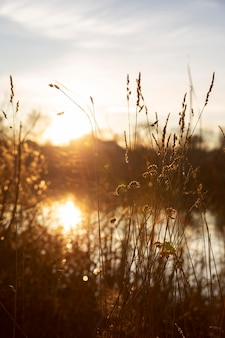 아침 햇살의 아름다운 전망