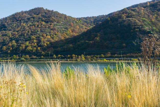 夏の山の川の美しい景色。川は山の湖から流れています。草、水、花、石。