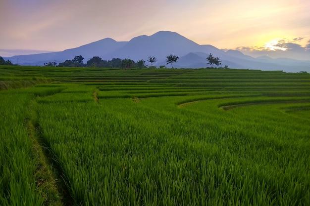 山と田んぼの美しい景色