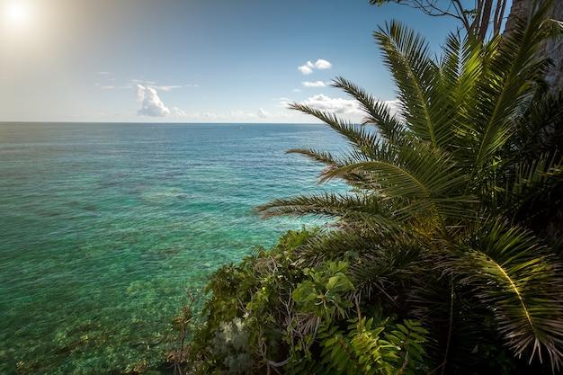 Прекрасный вид на пальму, растущую на морском пляже в солнечный день