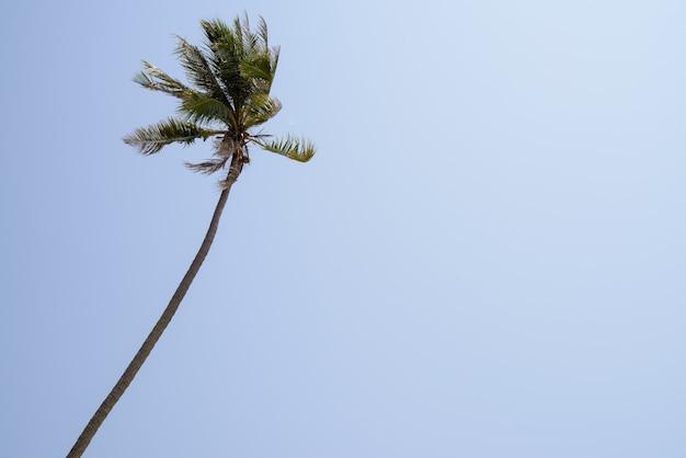 Прекрасный вид пальмы на голубое небо.