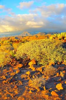 Прекрасный вид на каменистую пустыню на закате в тенерифе, канарские острова