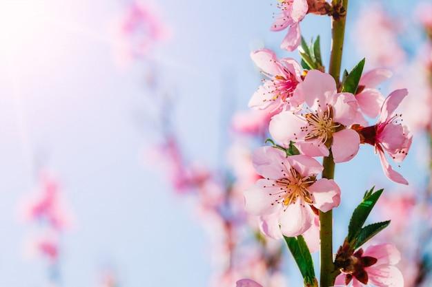 春の花の美しい景色
