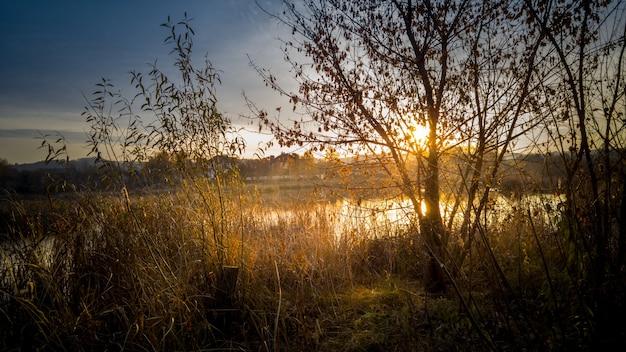 湖で育つ木を通して輝く太陽の美しい景色