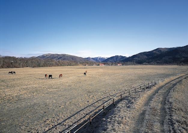 山のある野原で放牧している馬の美しい景色