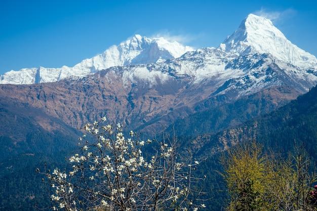 히말라야 산맥의 아름다운 풍경. 눈 덮인 산 정상과 꽃이 만발한 나무. 산에서 트레킹 개념