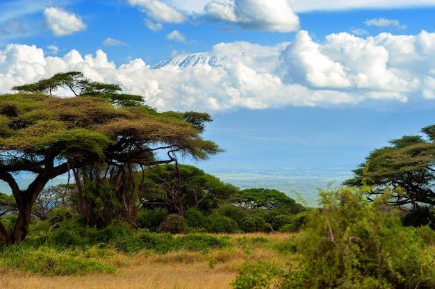 Прекрасный вид на величественную гору килиманджаро из национального парка, кения
