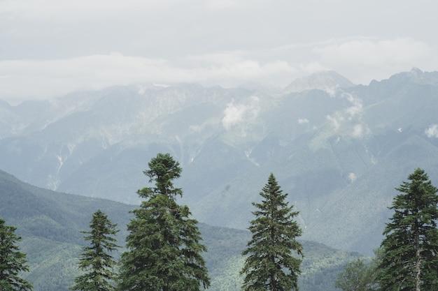 高い月の上の山の霧の空を背景に山の緑のトウヒの美しい景色...
