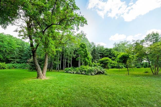公園の森と山の小川の美しい景色。木材