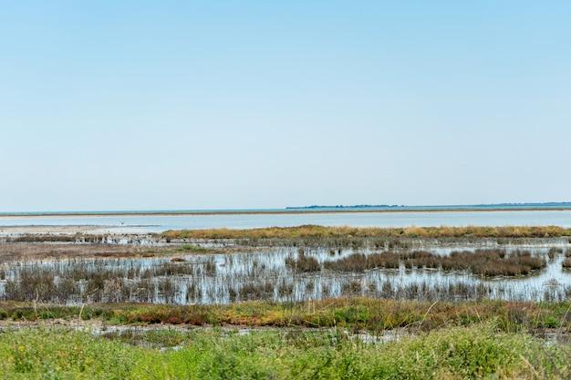 Прекрасный вид на соленое озеро сиваш в украине. пейзаж с интересными кустами на переднем плане. путешествие фото. иллюстрация для путешествий. вода и голубое небо. красивый природный ландшафт