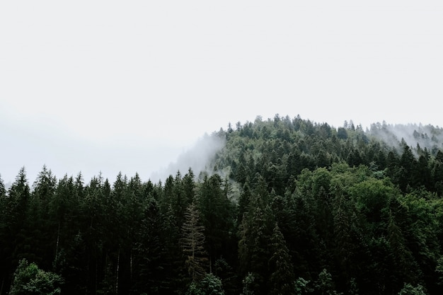 안개가 자욱한 날씨에 포착 된 열대 우림의 나무의 아름다운 전망