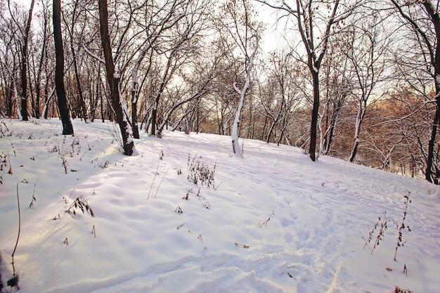 ロシアでキャプチャされた雪で覆われたフィールド上の木の美しい景色