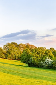 푸른 하늘 아래 잔디 필드에 녹색 잎을 가진 나무의 아름다운 전망