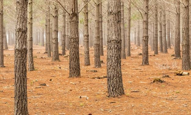 Прекрасный вид на стволы деревьев в лесу, снятый в кейптауне, южная африка