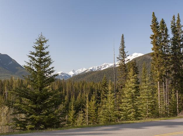 Прекрасный вид на деревья и скалистые горы на заднем плане в канаде