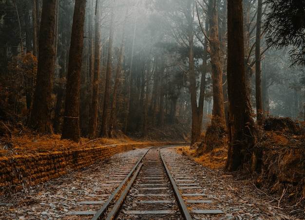 Beautiful view of old train tracks in a forest in alishan, taiwan
