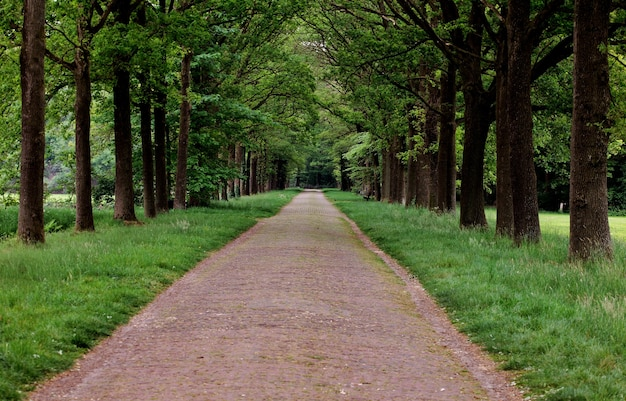 Beautiful view of a path surrounded by green trees in a park