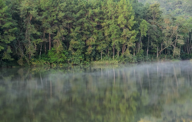 Beautiful view of pine tree reflection in a lake at pang oung national park in mae hong son, thailand
