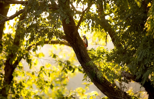 Beautiful view of red woodpecker sitting on big tree at sunset