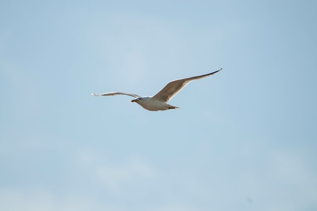 Beautiful view of a seagull in flight