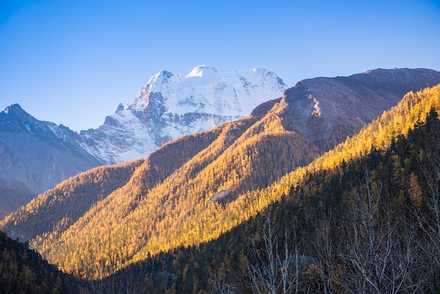 Beautiful view snow peak with  autumn leaves in  yading nature reserve, sichuan, china.